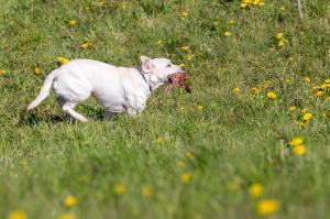 Hundematch (15 of 71)