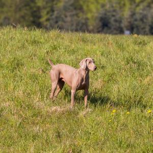 Hundematch (17 of 71)