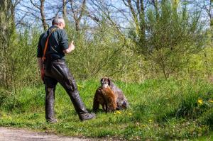Hundematch (24 of 71)