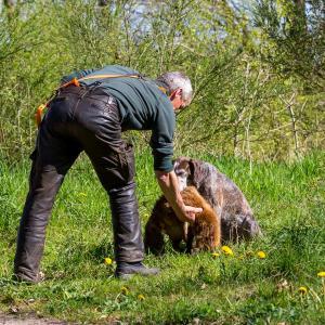 Hundematch (25 of 71)