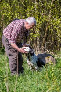 Hundematch (44 of 71)