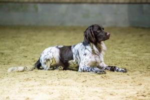 hundetræning I (10 of 16)