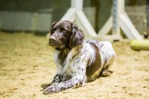 hundetræning I (12 of 16)