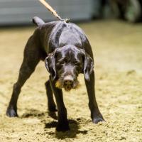 hundetræning I (4 of 16)