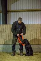 hundetræning I (6 of 16)