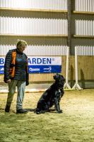 hundetræning I (7 of 16)