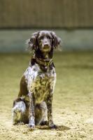 hundetræning I (8 of 16)